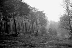 Forêt noire images libres de droits