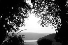 Forêt noire et blanche pendant le coucher du soleil Photographie stock