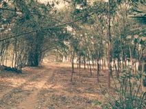 Forêt normale Photographie stock libre de droits