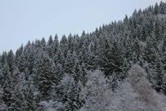 Forêt norvégienne 004 Image stock