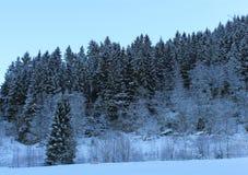 Forêt norvégienne 005 Image libre de droits