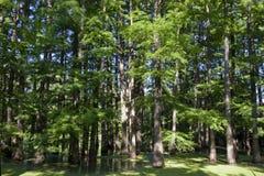 Forêt noyée Photographie stock