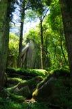 Forêt ombragée Image libre de droits