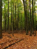 Forêt orange et verte Photos stock