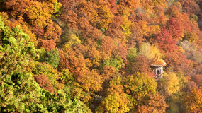 Forêt orange intérieure cachée par Pavillions Photo libre de droits
