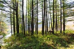 Forêt ou parc verte photographie stock libre de droits