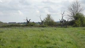 Forêt pétrifiée antique de dryades de chêne la vue à l'approche images stock