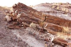 Forêt pétrifiée, Arizona, Etats-Unis Photos stock