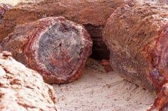 Forêt pétrifiée, Arizona, Etats-Unis Images stock
