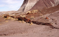 Forêt pétrifiée, Arizona, Etats-Unis Images libres de droits