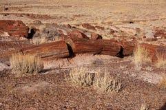 Forêt pétrifiée, Arizona, Etats-Unis Image libre de droits