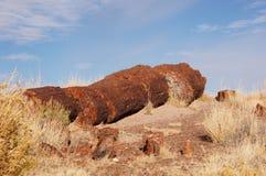 Forêt pétrifiée, Arizona, Etats-Unis Photo libre de droits