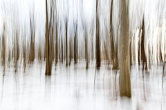 Forêt Painterly