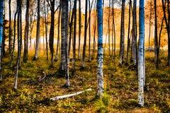 Forêt par la chute Image libre de droits