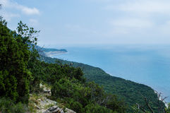 Forêt par la mer Images libres de droits
