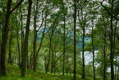 Forêt par Loch Lomond photographie stock libre de droits