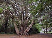Forêt, parc national de Killarney, Photographie stock libre de droits