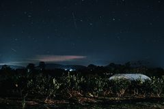 Forêt pendant la nuit et l'étoile dans le ciel image stock