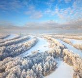 Forêt pendant le jour d'hiver froid photos stock