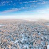 Forêt pendant le jour d'hiver froid, vue supérieure photographie stock