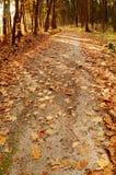 Forêt pendant le jour ensoleillé Images libres de droits