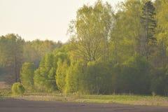 Forêt pendant le printemps photographie stock libre de droits