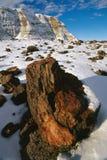 Forêt Petrified en hiver Photos libres de droits