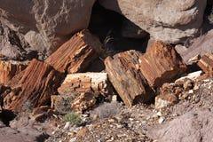 Forêt Petrified NP Photos libres de droits