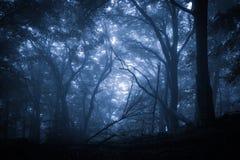 Forêt pluvieuse brumeuse fantasmagorique Photo libre de droits