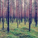 Forêt polonaise Photos stock