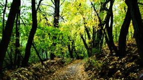 Forêt polonaise pendant l'automne, images stock