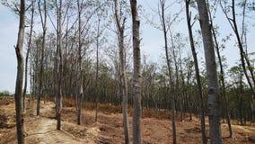 Forêt pour notre meilleur avenir images libres de droits