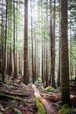 Forêt près de Seattle images libres de droits