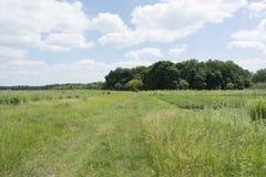 Forêt près des jardins abandonnés Images libres de droits