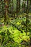 Forêt primitive photos stock
