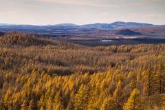 Forêt primitive Photo stock