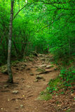 Forêt profonde Image libre de droits
