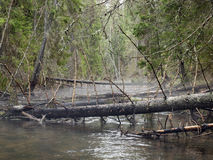 Forêt profonde Images stock