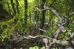 Forêt profonde Photos libres de droits