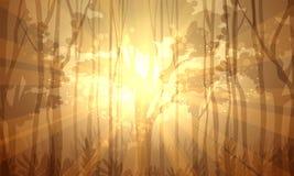 Forêt profonde Photo libre de droits