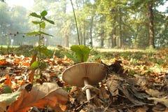 Forêt profonde Photo stock