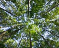 Forêt profonde avec des couleurs animées Image libre de droits