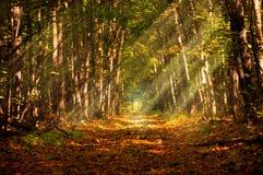 Forêt profonde d'automne en traces le rayon de la lumière du jour Photos stock