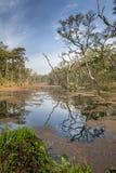 Forêt profonde dans la jungle du Népal (Chitwan). images stock