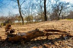 Forêt putréfiée d'automne d'identifiez-vous images stock