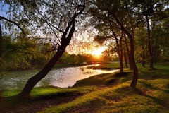 Forêt rêveuse au coucher du soleil Photos stock