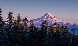 Forêt rayée par arbre près de capot de Mt Photos libres de droits