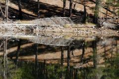 Forêt reflétée dans le lac de montagne brumeuse Photographie stock libre de droits
