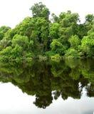 Forêt reflétée dans une lagune sur l'Amazone Photographie stock