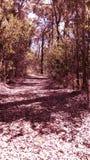 Forêt rose Photographie stock libre de droits